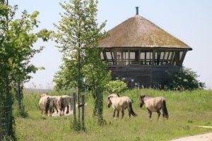 AutiDoeDag Oostvaardersplassen konikpaarden